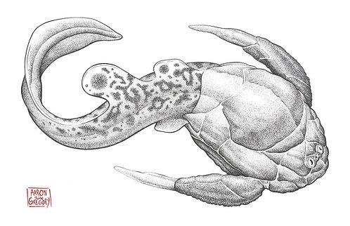 Art Print - Bothriolepis