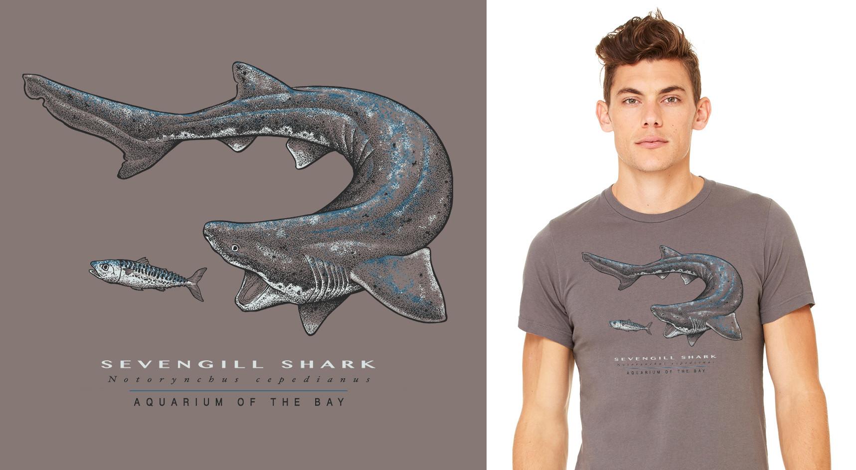 Aquarium of the Bay - Sevengill Shark