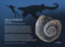 Helicoprion_info graphic_5x7.jpg
