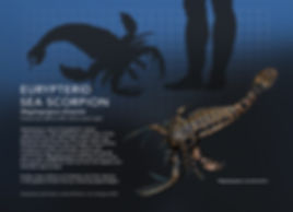 Megalograptus_info graphic_5x7.jpg