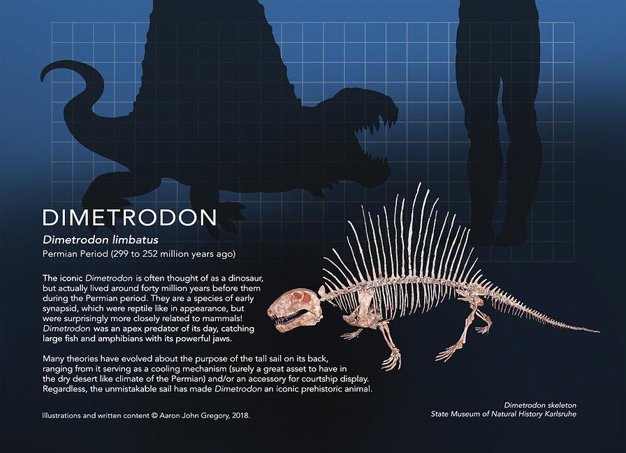 Dimetrodon_info graphic_5x7.jpg