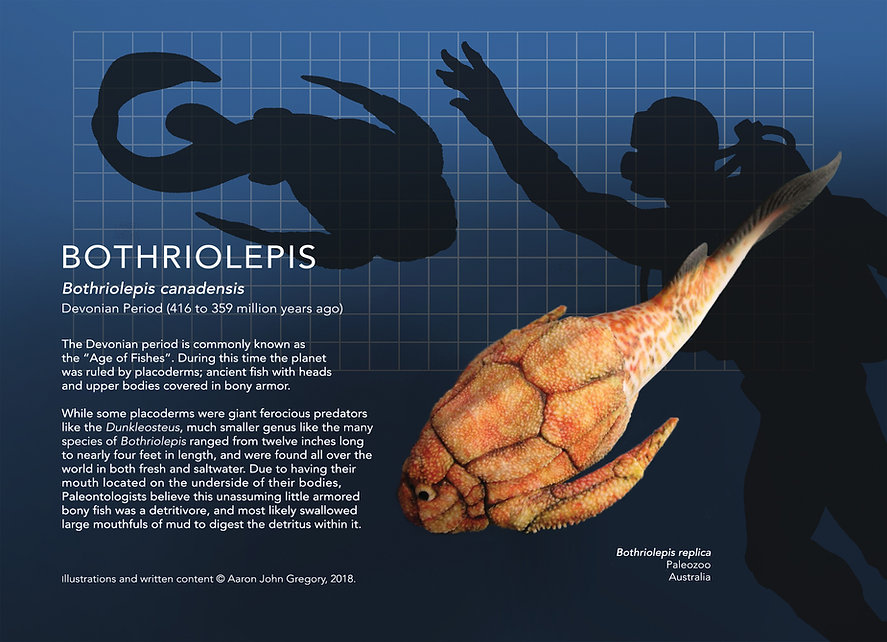 Bothriolepis_info graphic_5x7.jpg