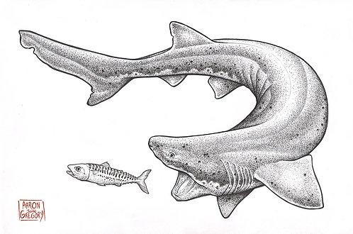 Art Print - Sevengill Shark vs Mackerel