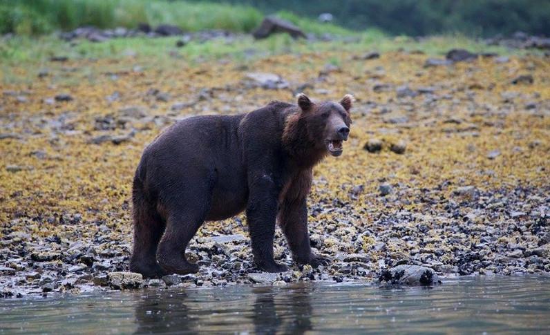Alaska_26.jpg