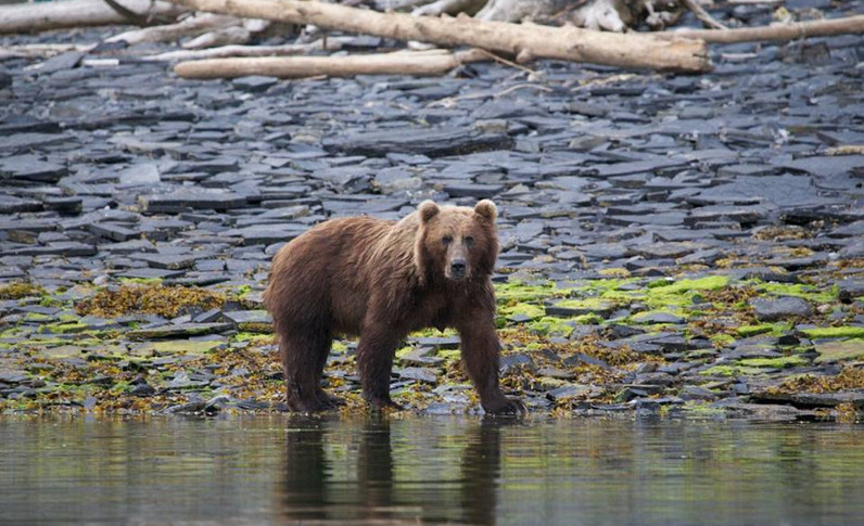 Alaska_11.jpg