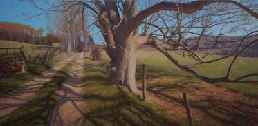 """Warm February Afternoon Oak"""