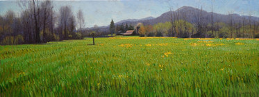"""April Field with Yellow Flowers"""