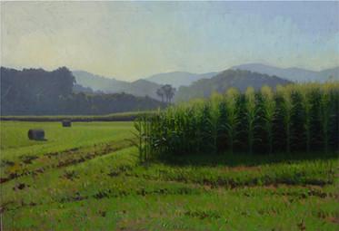 """Test Farm Early Morning Cornfield"""