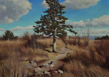 """Black Balsam Lone Pine"""