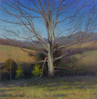 """Bethel Tree in Early Spring"""