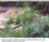 appendixE.pg646.jpg