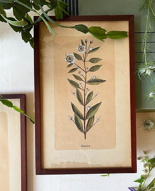 ancienne planche herbier | lovmint deco vintage