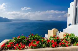 Flowers on the Mediterranean coast