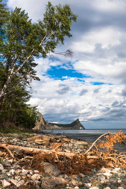 Dry pine tree on the rocky shore