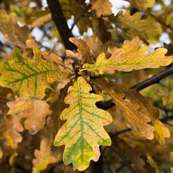 Autumn came to oak grove