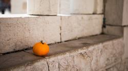 Mandarin on a stone wall-2