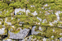 Green moss on the stone wall