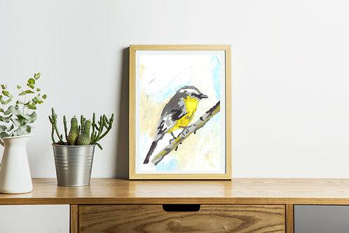 Song bird, grey and yellow