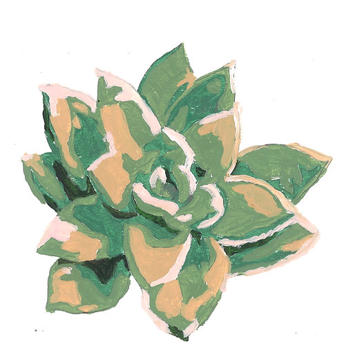 Succulent Series Stationary