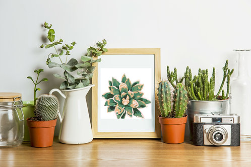 Greens and pinks succulent series 1