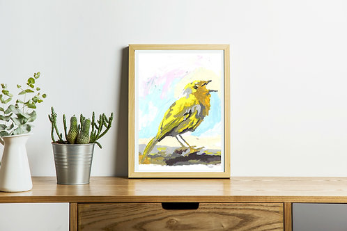 Song bird, yellow