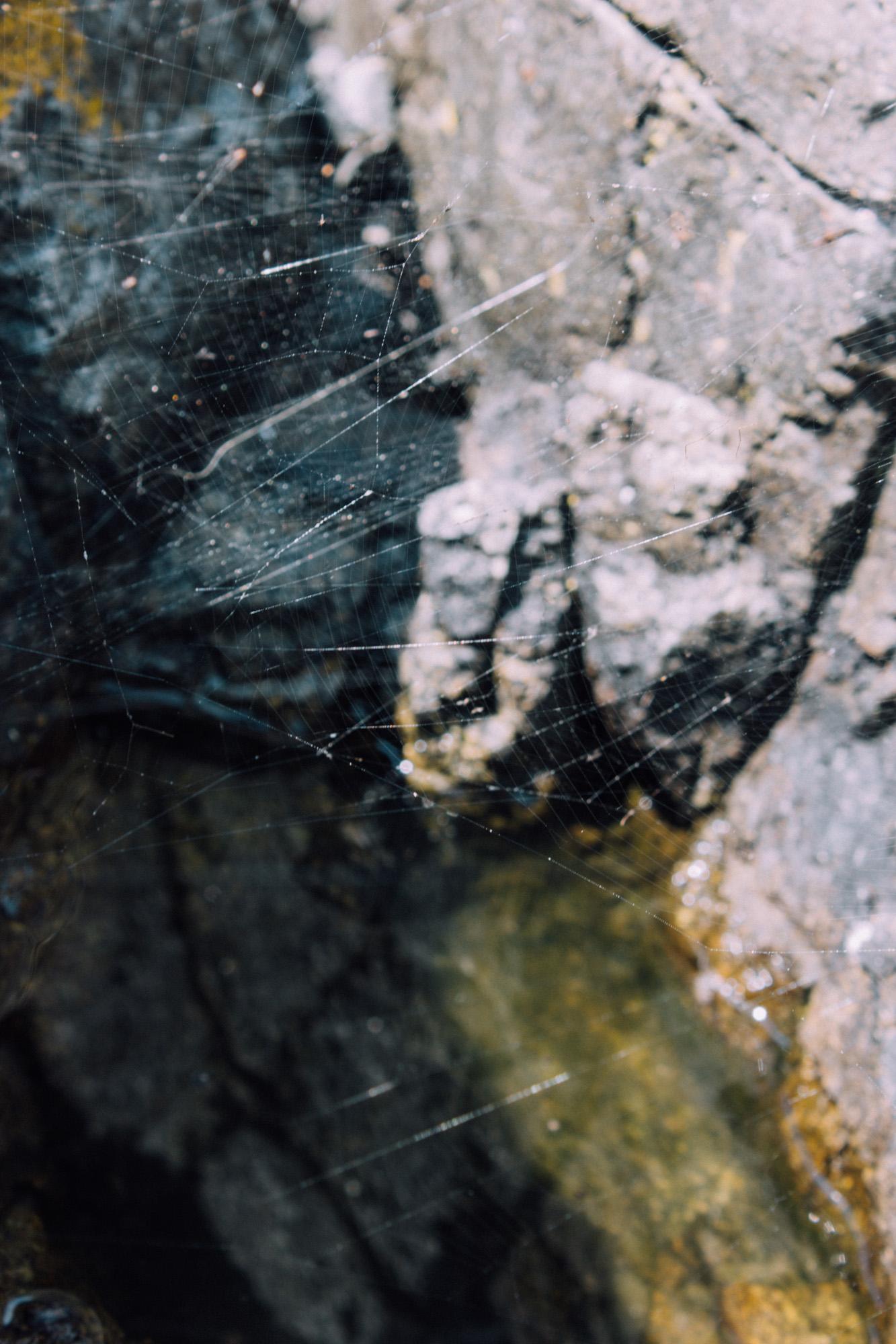 web-83