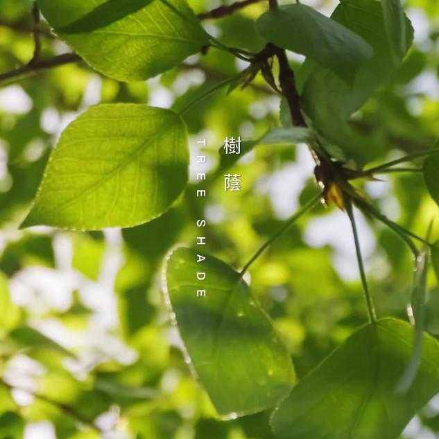 Tree.mp4