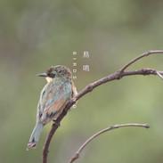 bird.mp4