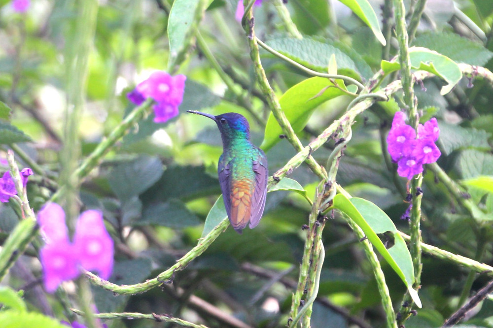 A hummingbird at the lodge at which we stayed