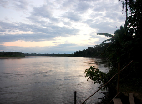 The Amazon Rainforest - Worth the Hype?