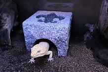 爬虫類シェルター