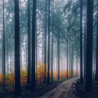 Forest trees image that links to Second Opinion Evaluations page.