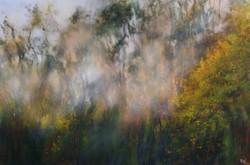 Woodland Autumn Sunrise