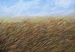 Windy cornfield