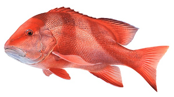 Processing Room blast frozen fish