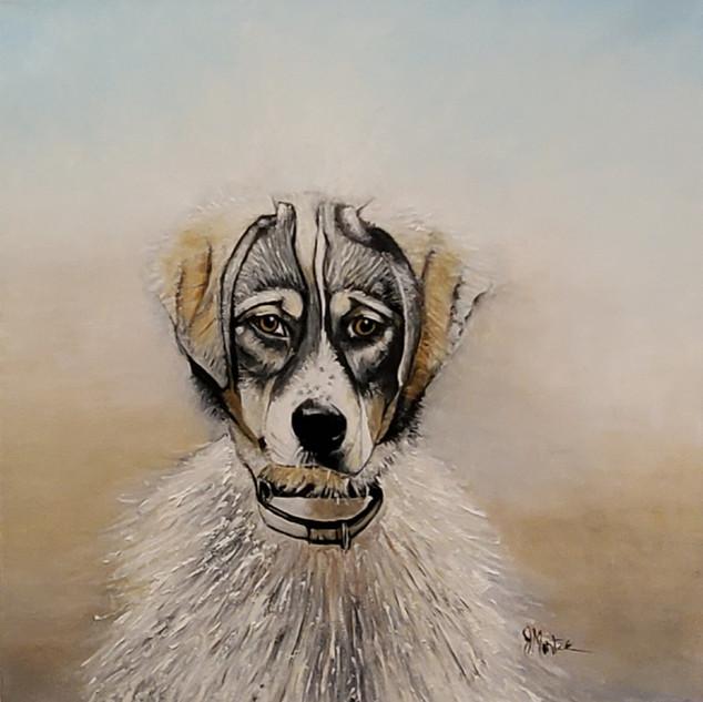 Pet Portrait Jan 2021