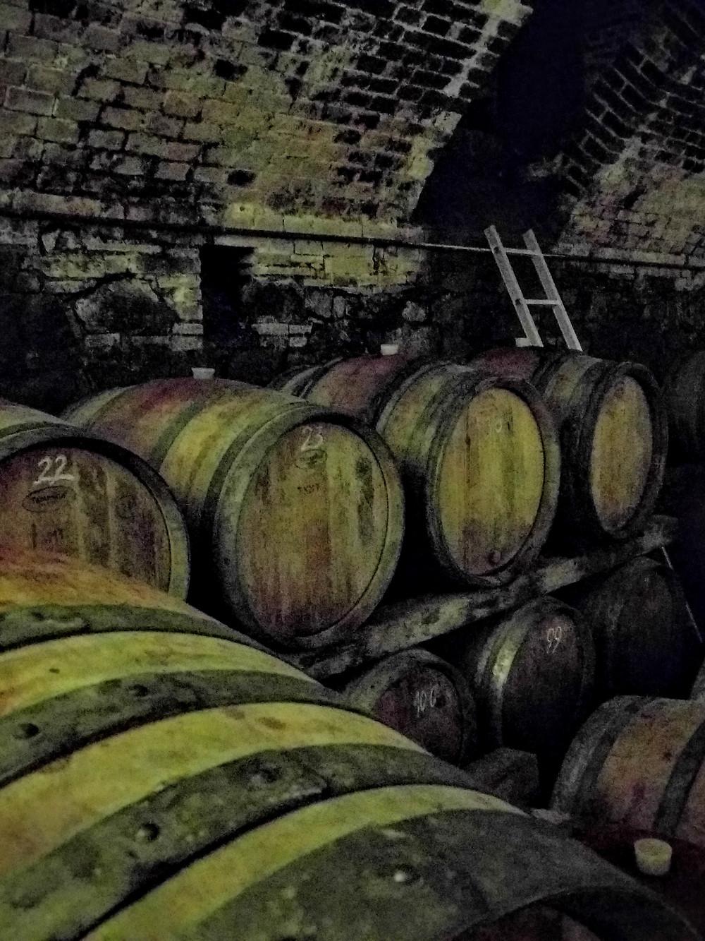 Wine Cellar (Florence, Italy)