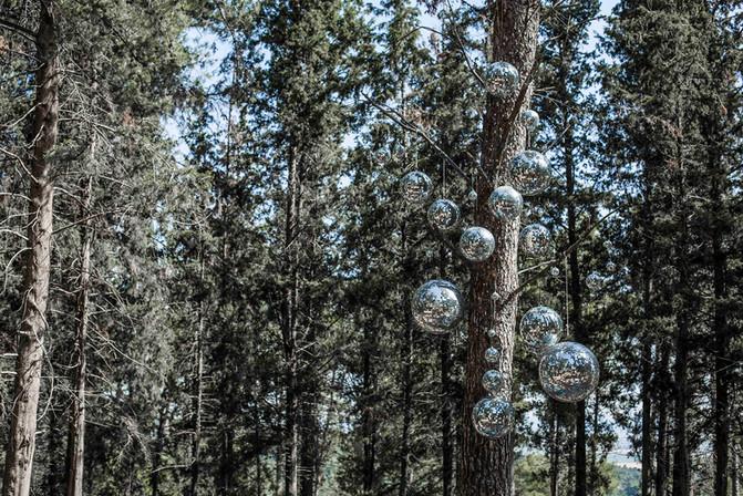 כדורי דיסקו ביער