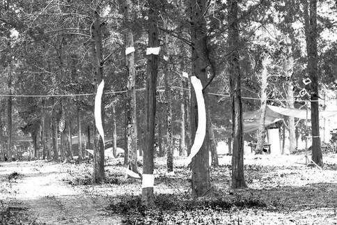 מעגל אומנות ביער.jpg