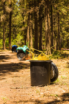 פחי אשפה ביער.jpg