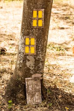 בית על העץ.jpg
