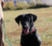 pups oct2018 200.JPG