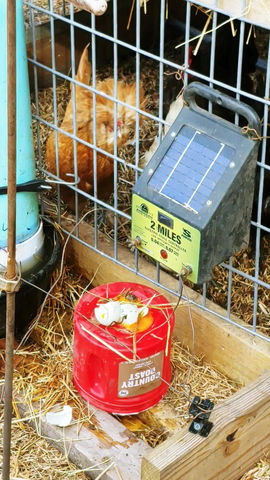 Egg Eaters & Predators