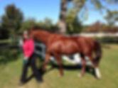 walking horse.jpg