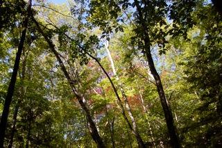 windward trees.jpg