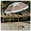 Thumbnail: Beach Umbrella - Delfina