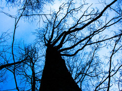 tree-200221.jpg