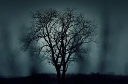 tree-407256.jpg