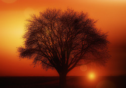 tree-117582_1920.jpg