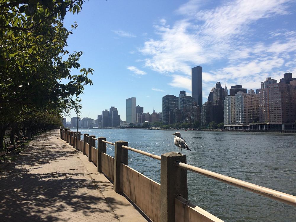 roosvelt island, new york city